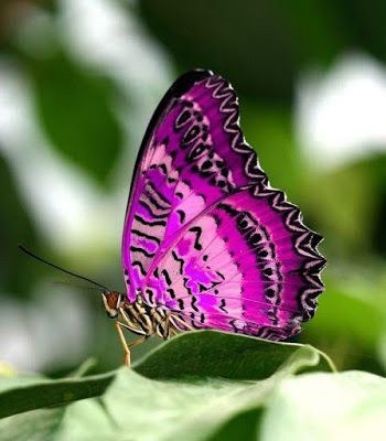 Imagen de mariposa tonos purpura