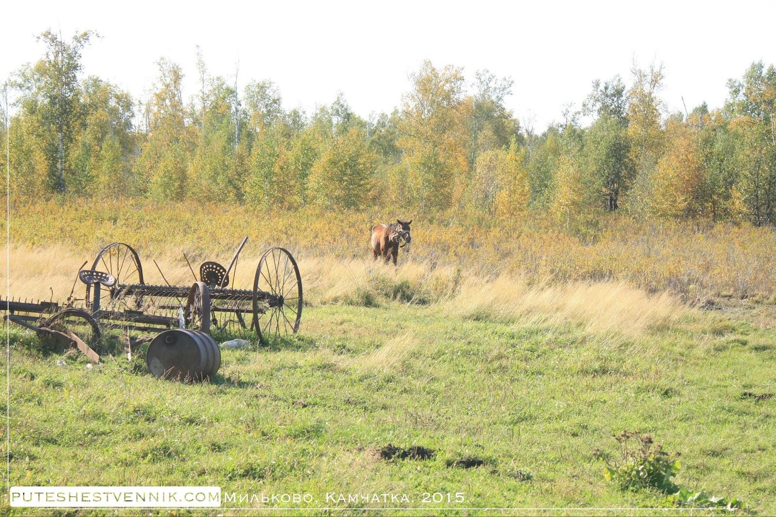 Лошадь и сельскохозяйственная техника