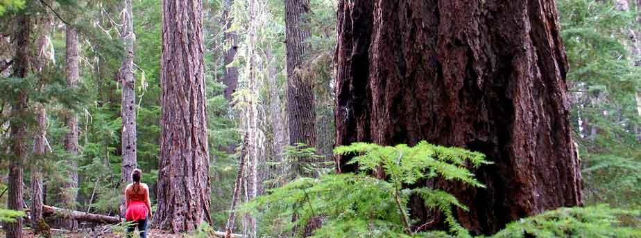 Basalt Stone Umpqua National Forest : Mother nature umpqua national forest oregon