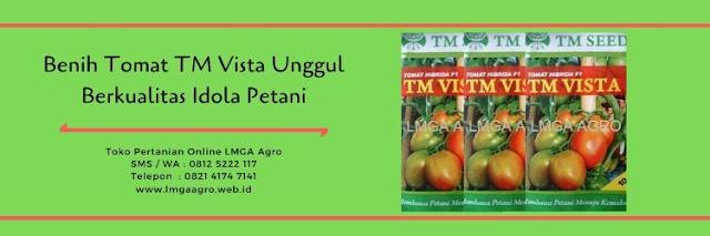 benih tomat TM vista,tomat TM vista,budidaya tomat,benih tomat,tanaman tomat,lmga agro