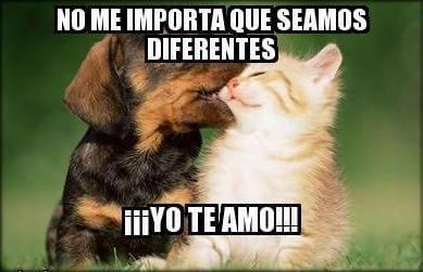 Amor Entre Perro Y Gato Frases Graciosas Facebook