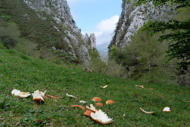 Foz de Moñacos - Asturias