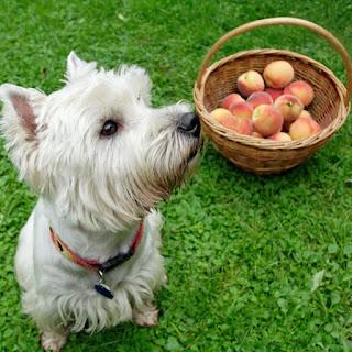 Dog peach