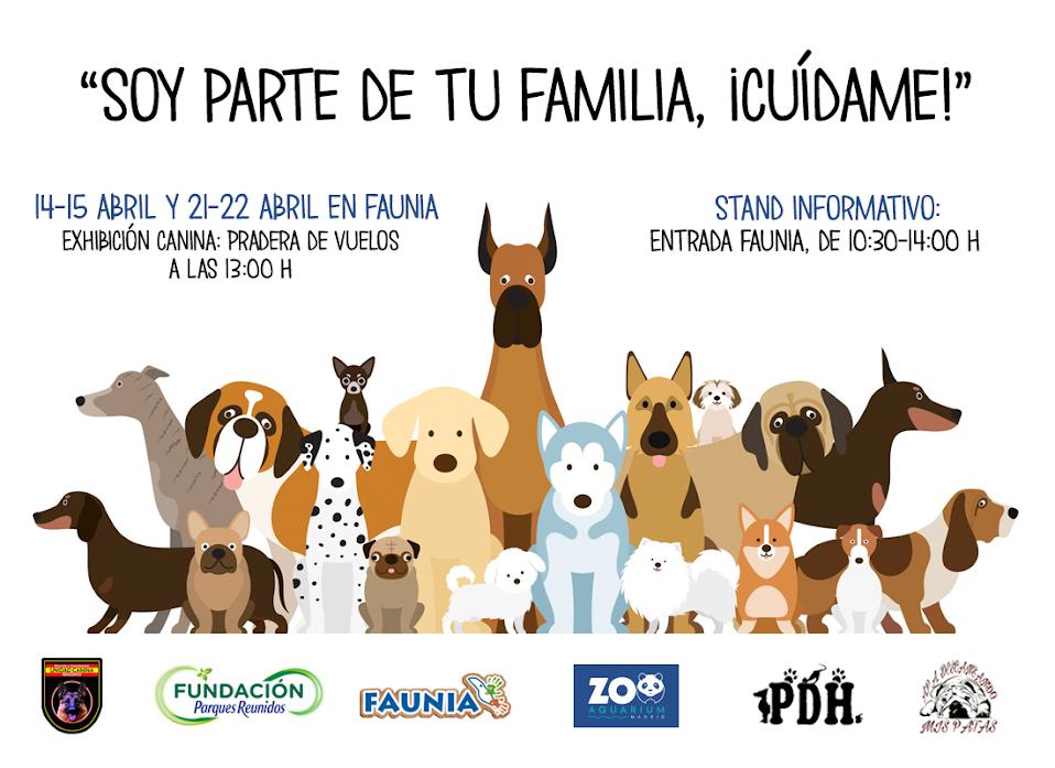 Jornadas de adopción y cuidado responsable de mascotas