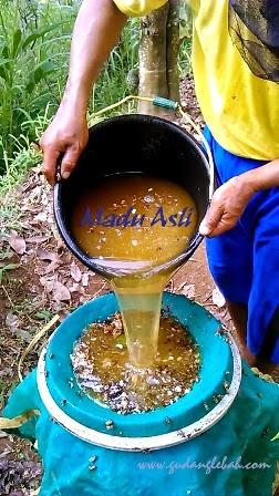 madu asli, Madu murni, suplier madu