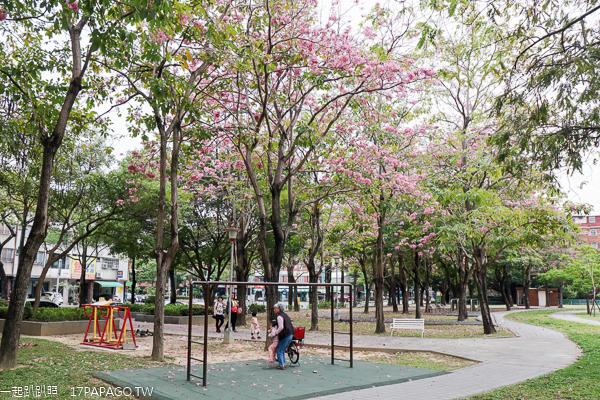 台中東區大智公園洋紅風鈴木花開,還有磨石子溜滑梯好好玩