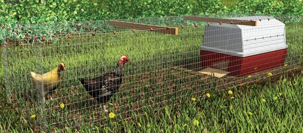 The Perfect Chicken Coop for Any Space   Community Chickens