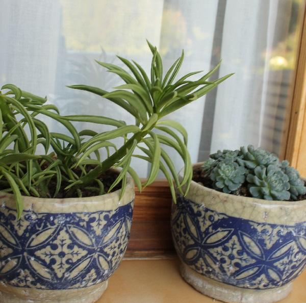 Reproducir plantas suculentas guia de jardin for Guia de plantas de jardin