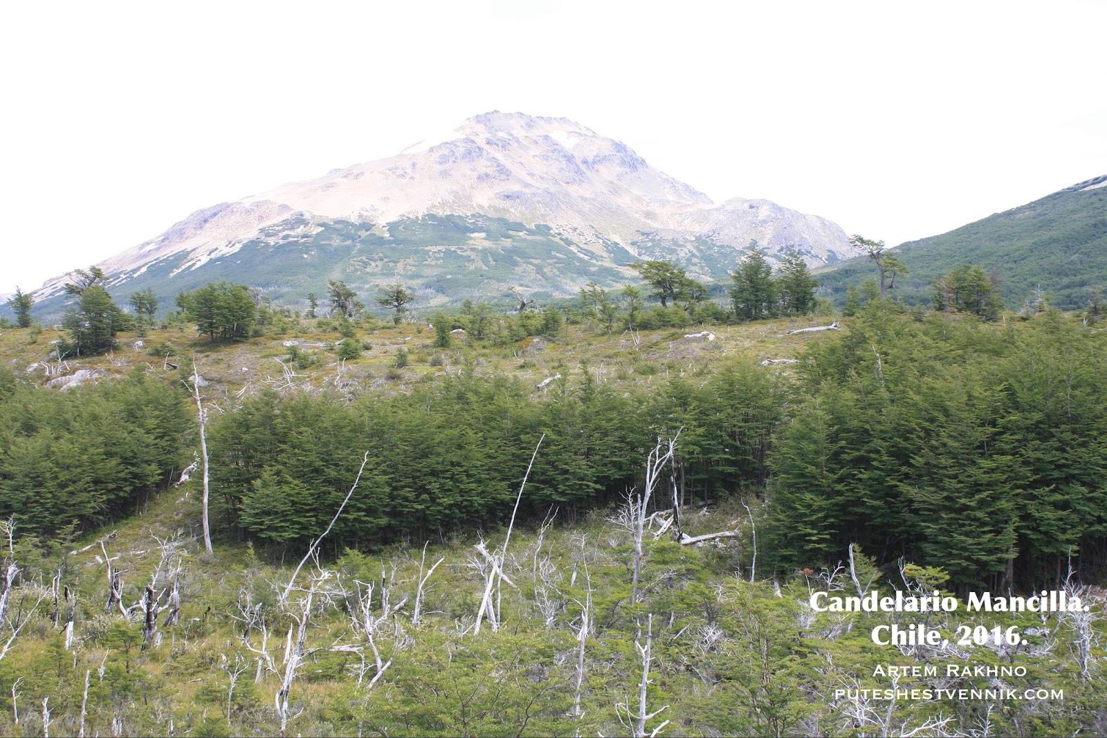 Гора и сухостой