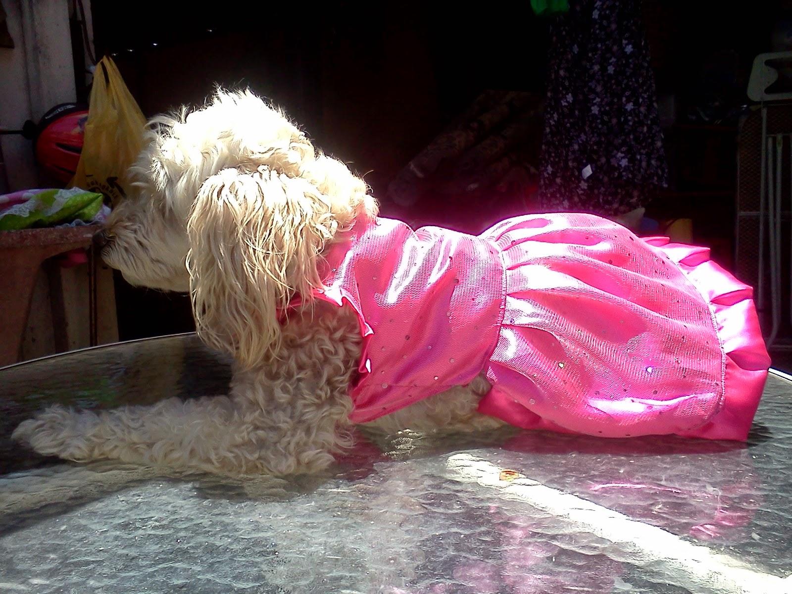 Mascotas Pintosas: Vestidos de Fiesta