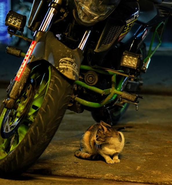 Sourajit Saha Photography 9