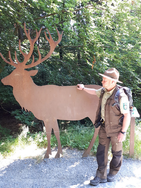 Ranger Sasha with Deer at Nationalpark Eifel