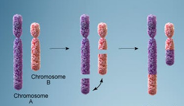 Bagian Bagian Kromosom Beserta Ciri ciri dan Bentuk Pada Kromosom