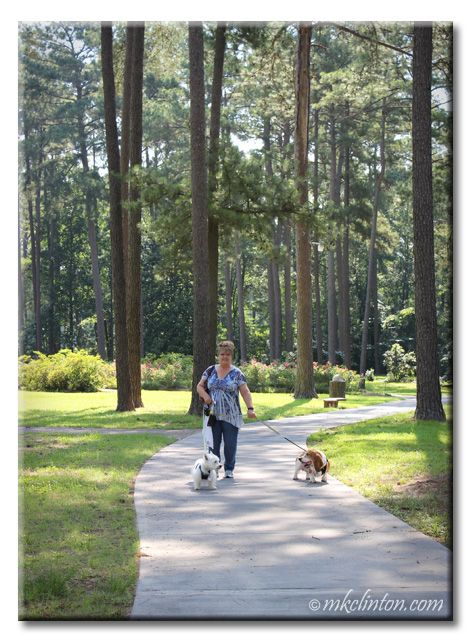 Woman walking Basset and Westie at park