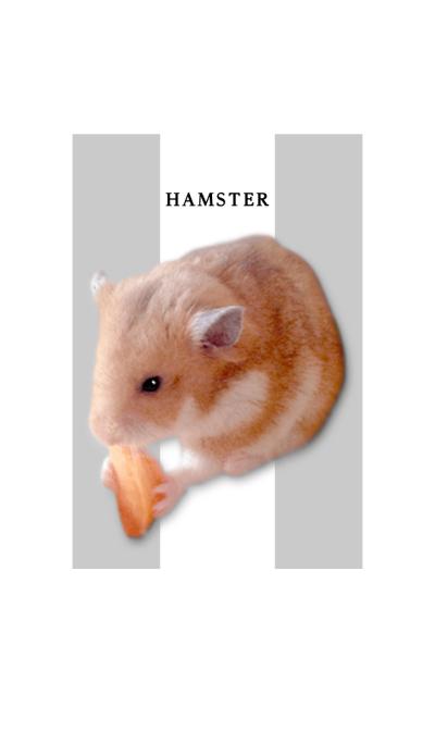 hamster ...