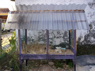 Burung Branjangan -  Kandang Penangkaran Burung Branjangan Yang Ideal