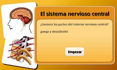 http://www.primaria.librosvivos.net/archivosCMS/3/3/16/usuarios/103294/9/6EP_Cono_cas_ud2_SistemaNervioso/frame_prim.swf