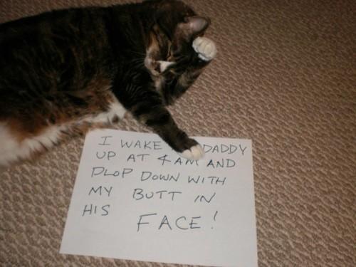 貓咪道歉網