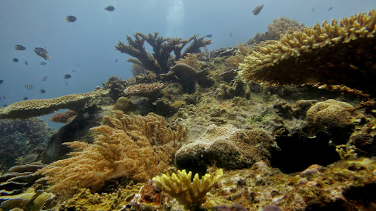 Suspended Sediment as Coral Stressors