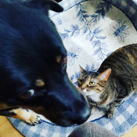 image of Zelda the Black and Tan Mutt looking dubious while Sophie the Torbie Cat lies on the floor looking up at her plaintively