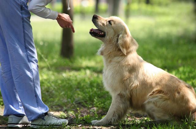 Dog-Training-Sit-Command