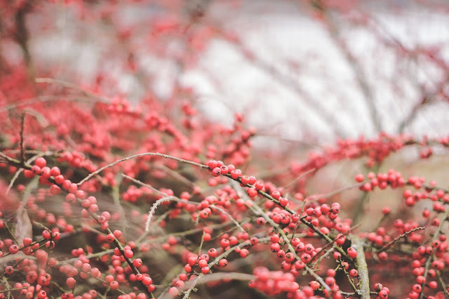 Bukiet zimowych fotografii