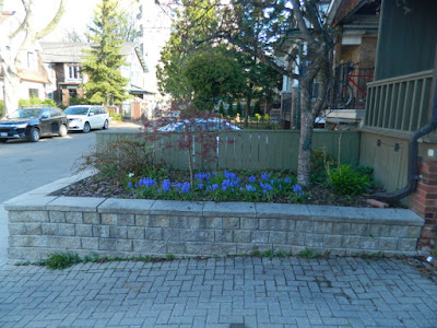 Roncesvalles Village Toronto new garden installation before Paul Jung Gardening Services