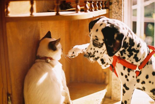 oldal kutya és macska találkozó)