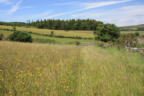 Bellever Moor & Meadows Nature Reserve - Photo copyright DWT (All rights reserved)