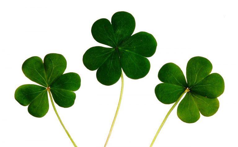 Irlandia, Dzień Świętego Patryka, narodowe święto Irlandii Północnej, zielona koniczyna, symbol Irlandii, EUROPA, Irlandia zwyczaje, Irlandia ciekawostki