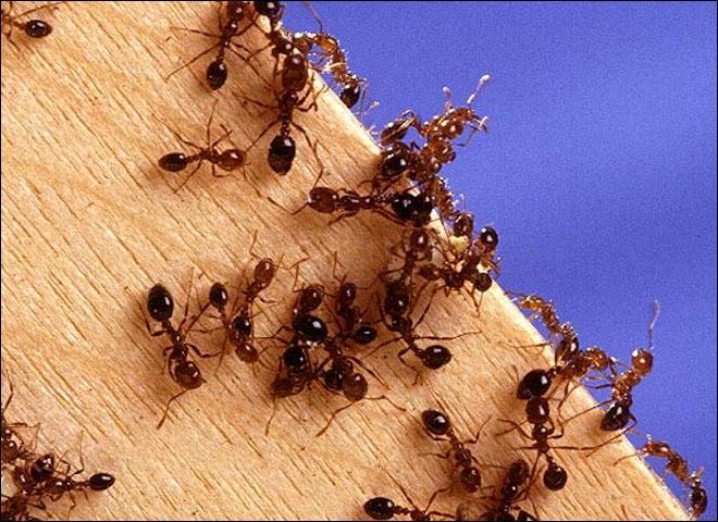 ameisen bek mpfen die besten tipps gegen ameisen im haus coole tipps. Black Bedroom Furniture Sets. Home Design Ideas