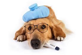 Köpekleri Öldüren Hastalıklar