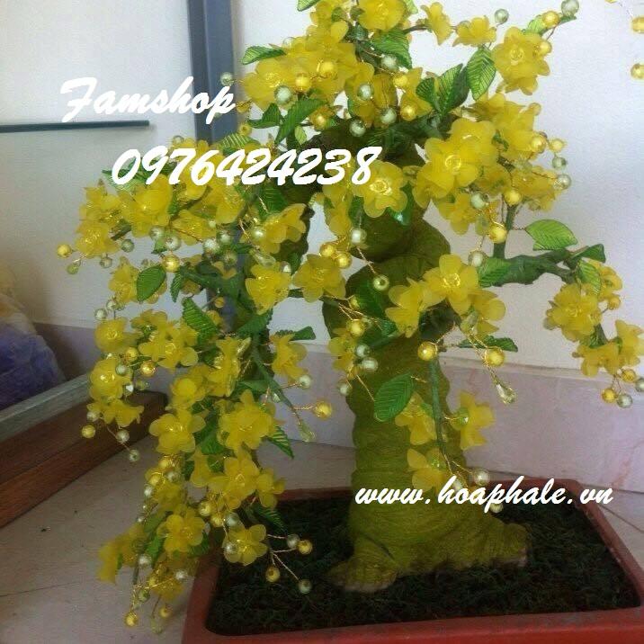 Goc bonsai cay hoa mai o Duong Van Be