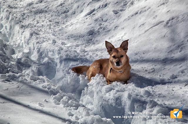 Ambra nella neve
