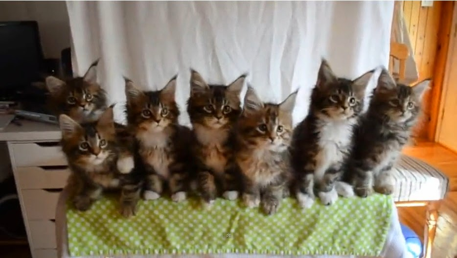 http://www.funmag.org/video-mag/funny-videos/seven-cute-kittens-with-great-reflexes/