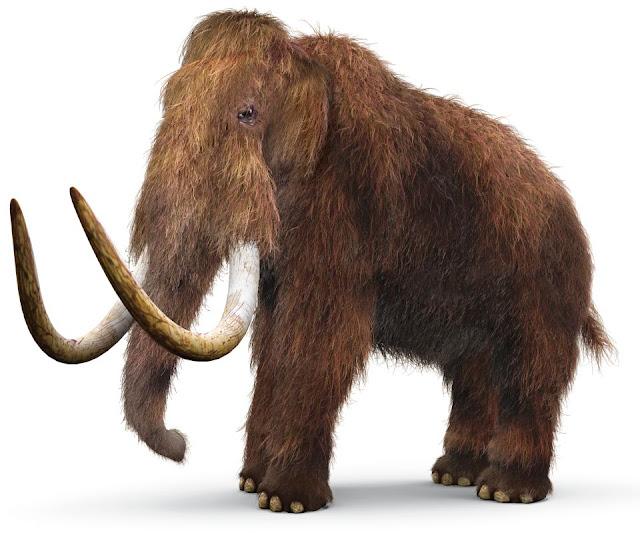http://www.faunatura.com/la-extincion-de-los-mamuts.html