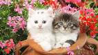 New Baby Cats Animal Hd Wallpaper9