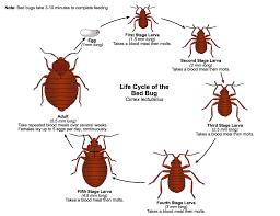 The Honey Bee (Apis mellifera) life cycle,  structure, Reproduction ,apis mellifera mellifera,western honey bee facts,apis cerana