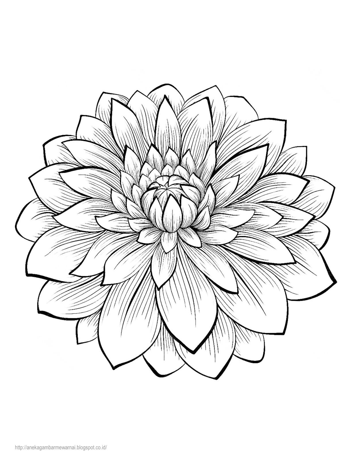 bunga dahlia 1