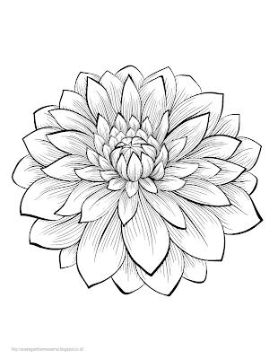 Gambar Mewarnai Bunga Dahlia Untuk Anak Paud Dan Tk