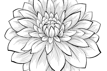 Gambar Mewarnai Bunga Dahlia