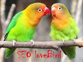 Membahas Harga Lovebird Dalam SEO