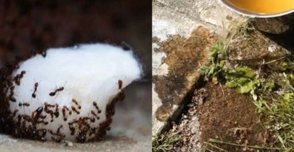 A Great Tip To Get Rid Of Ants In Your Home