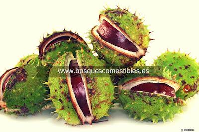 Fruto contiene en su interior las semillas un número de 1 a 3