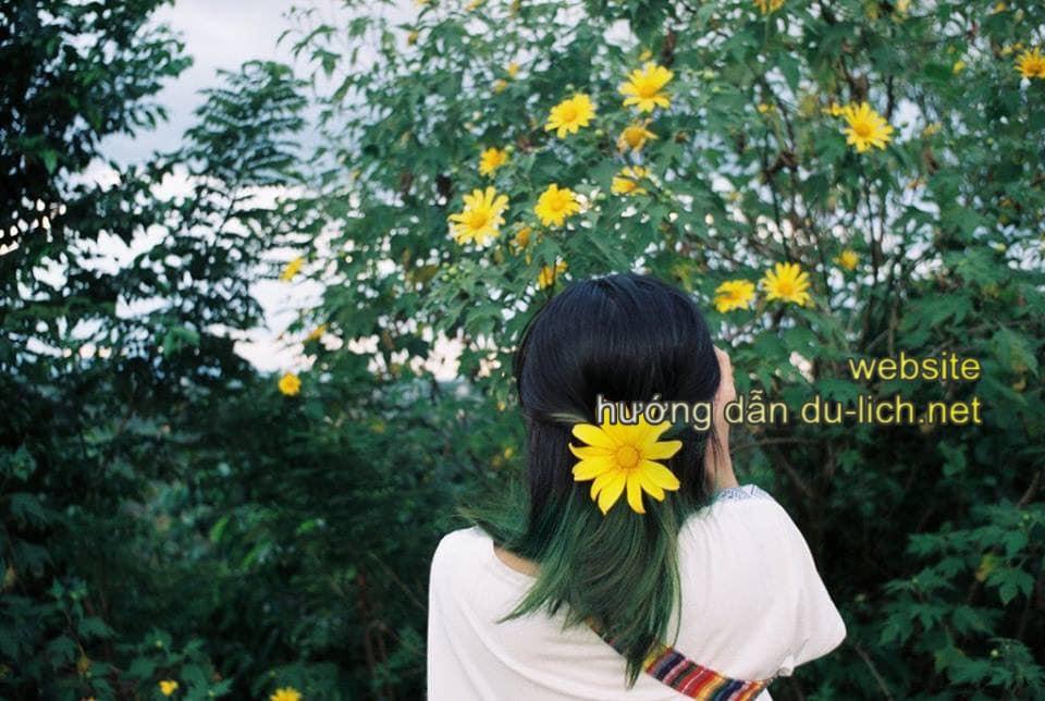 Hoa cài mái tóc