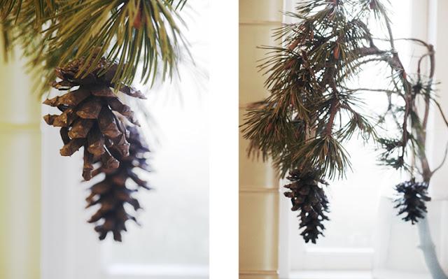Fyrretræsgren med kogler i juleboligen