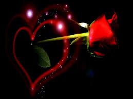 New Letest Hd Wallpaper Love Rose Dil Hd Wallpapers Free