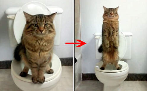 Video Shown Cat Use Toilet To Take A Poo How She Toilet