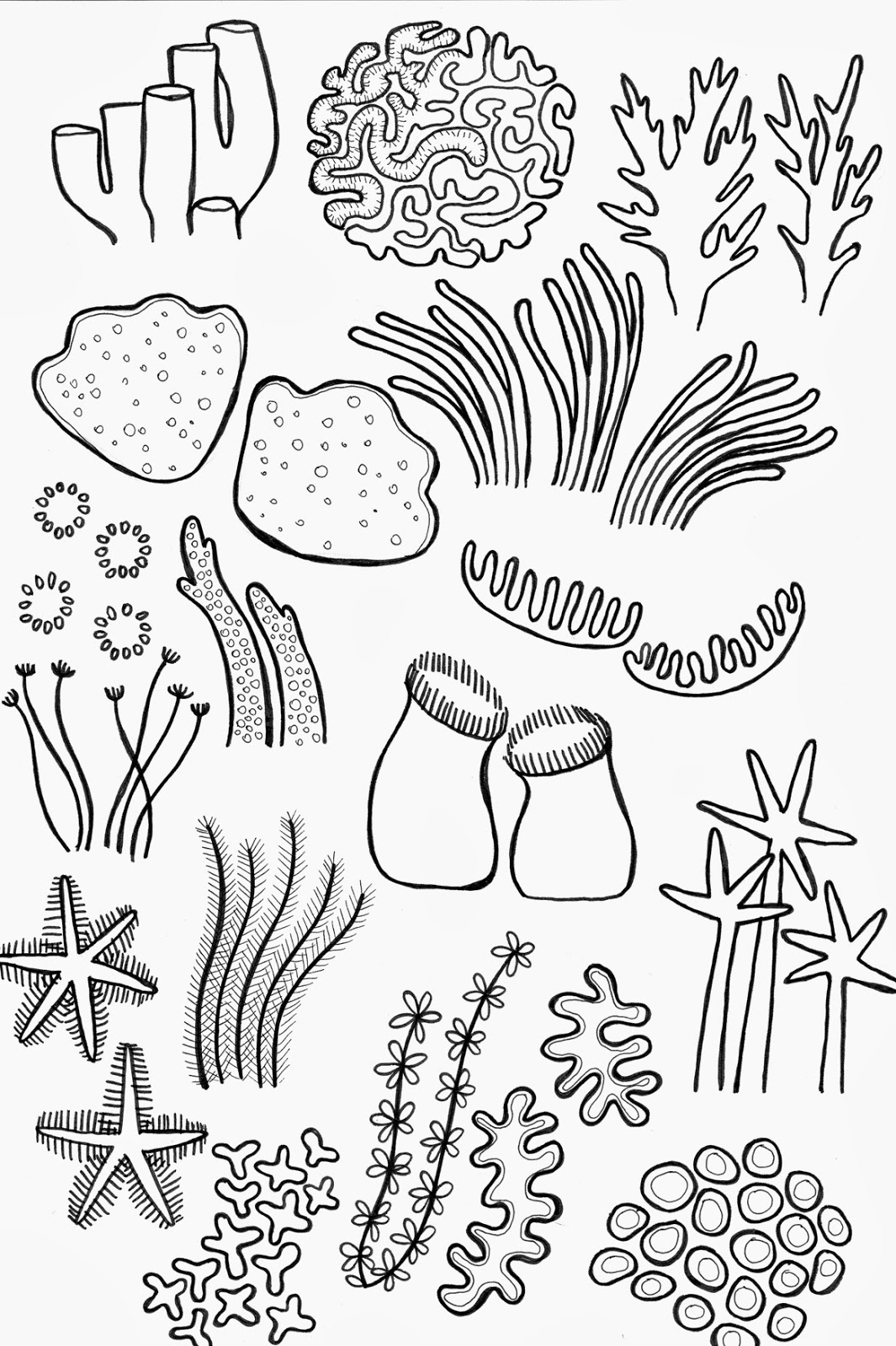 Coral Reef Plants Drawing
