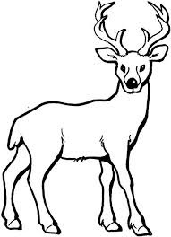 Best Of Deer Coloring Pages Images